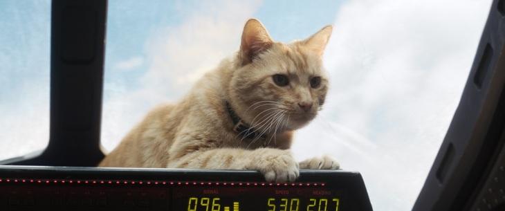 goose captain marvel cat flerken